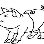 Schweinchen 1