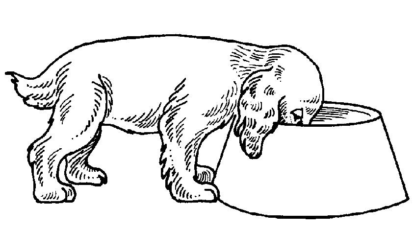Hund essen