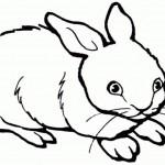 Kaninchen 1
