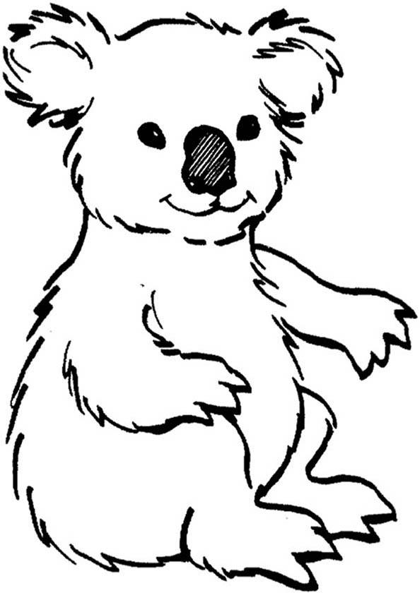 koala zum malen
