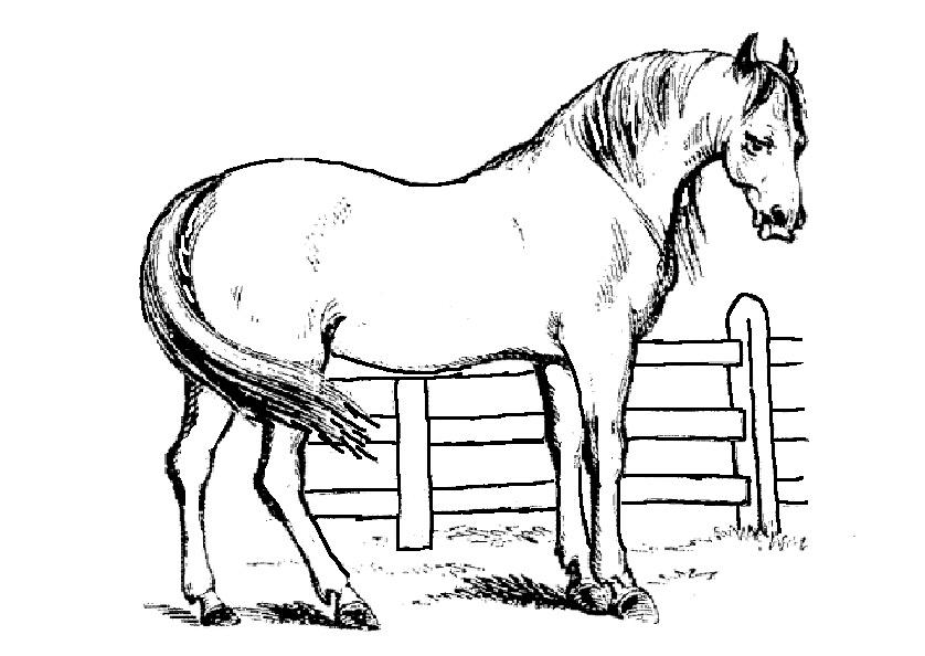 Ausmalbilder Pferde 1 | Ausmalbilder Tiere