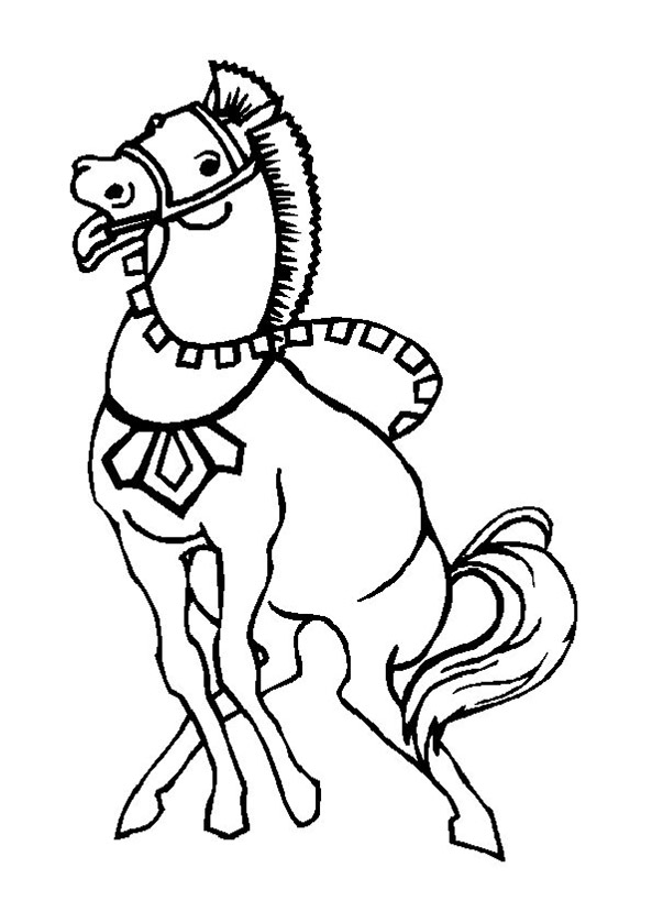 pferde 5