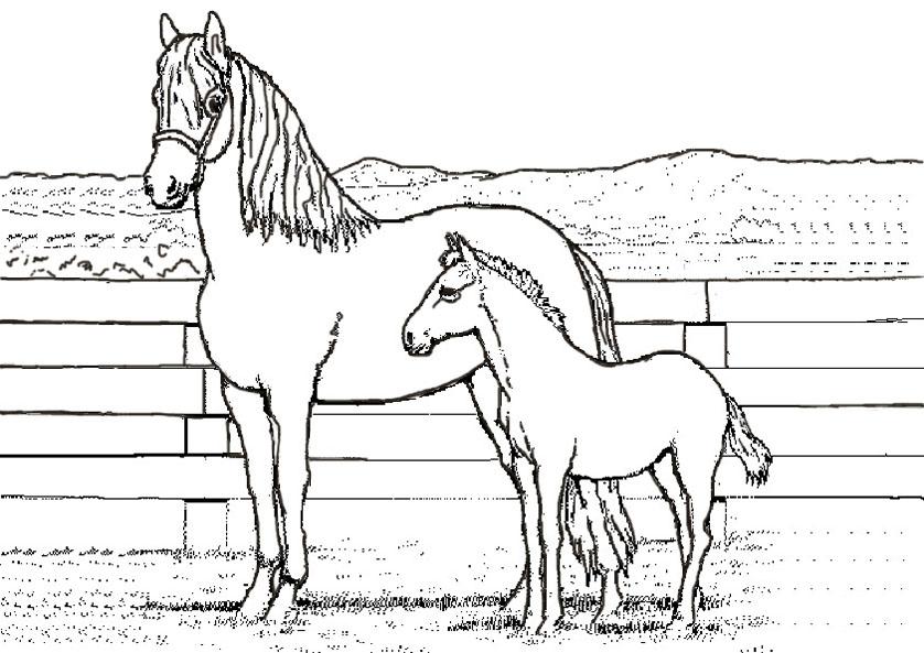 pferde ausmalbilder zum drucken kostenlos