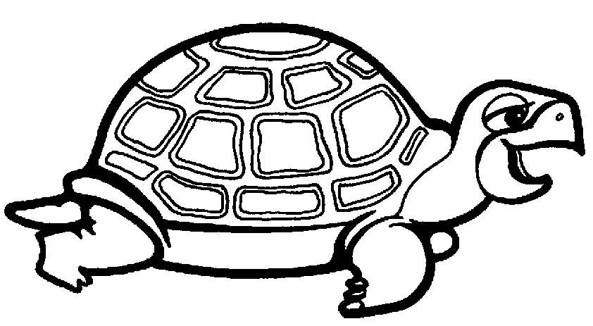 tortoise 1 zum malen