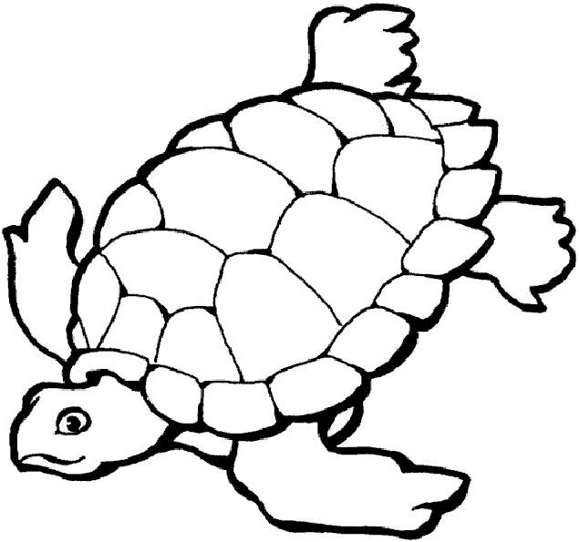 tortoise 2 zum malen
