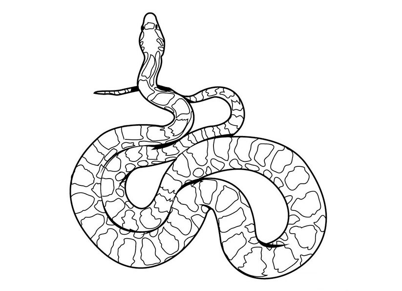 bilder zum malen schlange 2