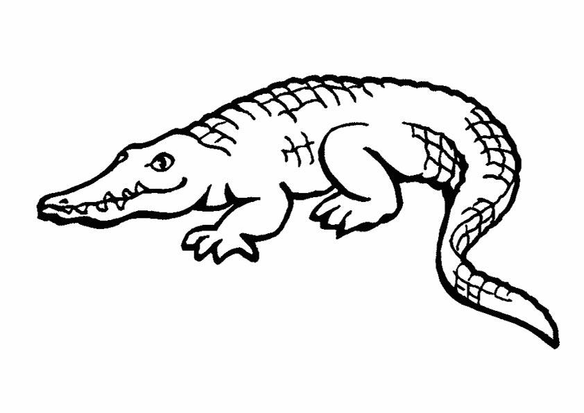 krokodril zum malen 1