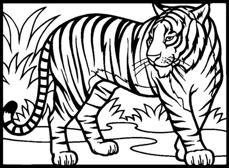 Ausmalbilder Tiger 1 Ausmalbilder Tiere