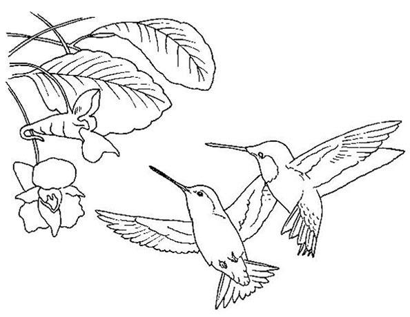 zwei kolibri