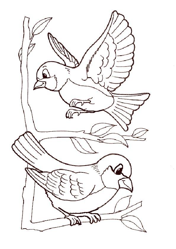 zwei vogel zum malen