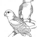 Vogel 8