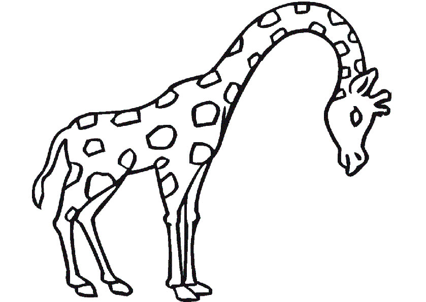 Giraffe 1 zum malen