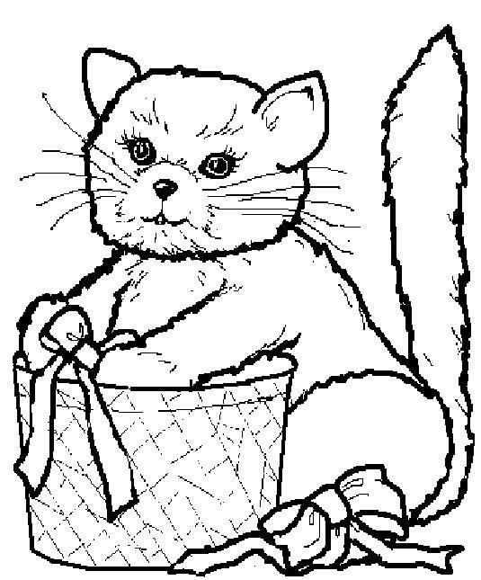 Katze mit Geschenk-Box
