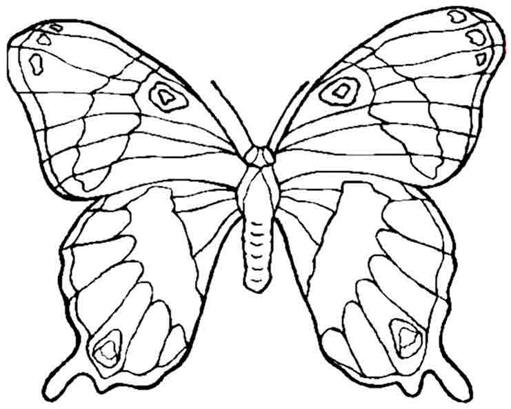 Schmetterling 3 zum malen