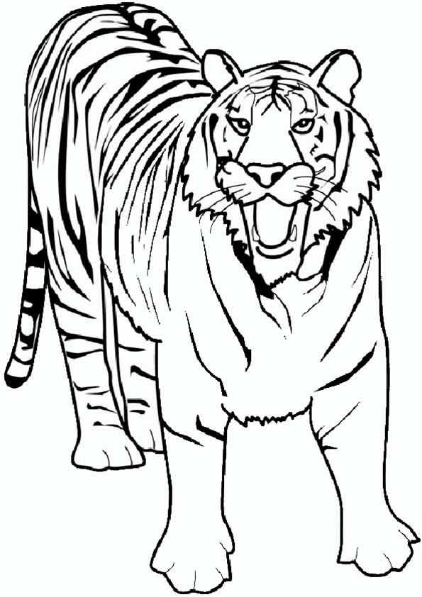 tiger 2 zum malen