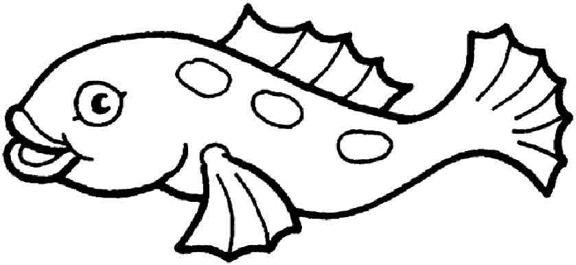Wassertiere 10