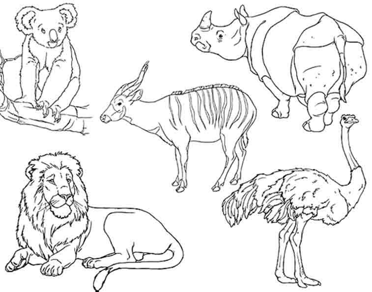 fünf wilde tiere