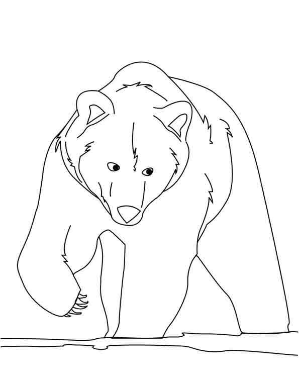 Bär 1 zum malen